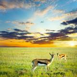 Fototapete Antilope - Herd - Säugetiere