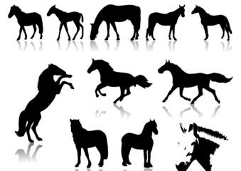 Pferd0000e