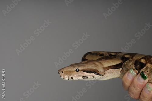 Die Schlange in der Hand