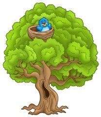 Big tree with blue bird in nest