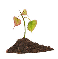 Tree shoot in soil isolated white on  background