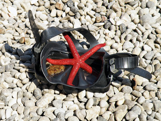 diving mask with red starfish on a pebble beach