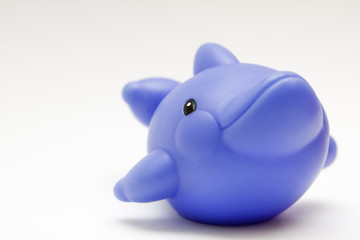 toy rubber dolphin on white background