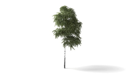 Isolated tree wind animation