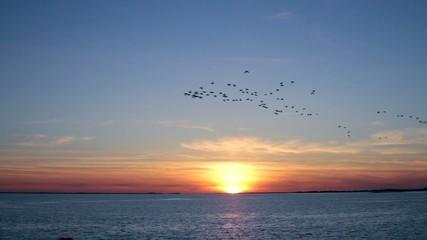 Vol de canards sauvages au couché du soleil