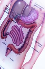 Digestive chart