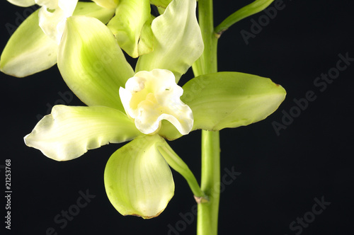 Macro of tiger's orchids