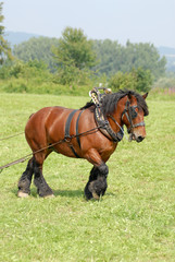 Holzrücken, Pferd, Kaltblut
