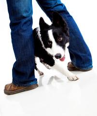 dog traing
