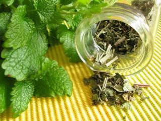 Teekräuter mit Melisse