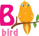 Fototapety animal alphabet-B