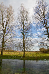Trees on the bank of a stream
