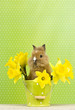 Kaninchen im Blumentopf