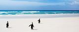 Penguin Journey poster