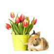 Baby Kaninchen mit Tulpen