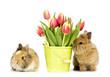 zwei Baby Kaninchen mit Blumen