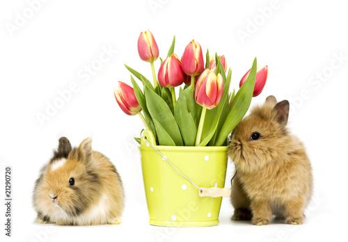 кролик с тюльпанами  № 1144623 бесплатно