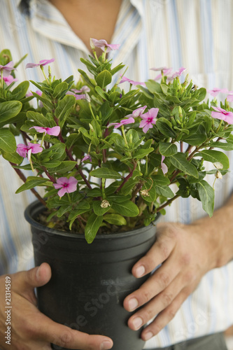 man holding potted plant mid section close up