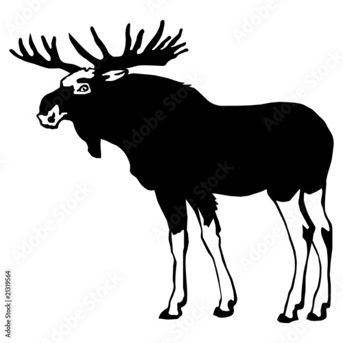 载体野性的野生动物头黑色