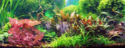 Decorative aquarium - 21320392