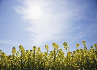 Vegetation against blue sky