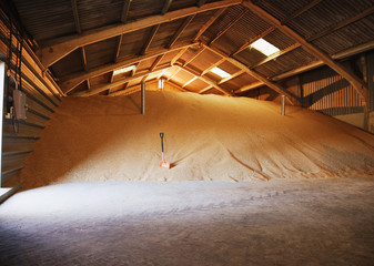 Pile of grain inside barn