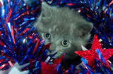 Gray kitten and Fourth of July decorations poster