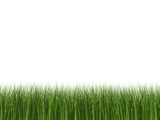 Green Grass Isolated 2