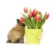 Baby Kaninchen und Blumentopf