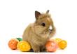 Baby Kaninchen mit bunten Eiern