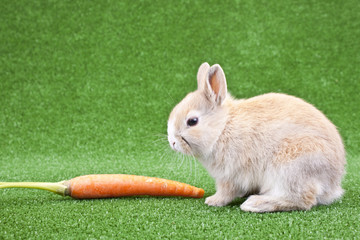 domestic rabbit and carrot