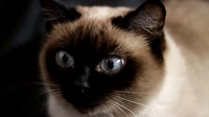 Cat on a dark background