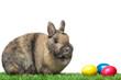 Osterhase neben bunten Ostereiern in Wiese - Easter bunny