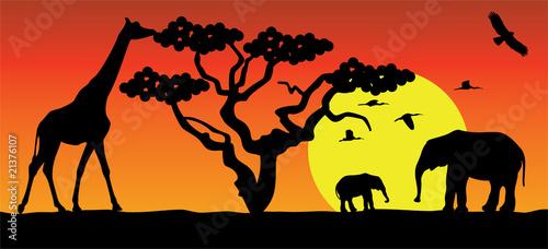 Fototapeta giraffe and elephants in africa