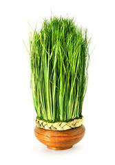 Green easter grass