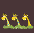 Three african safari giraffes. Vector Illustration.