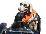 motorkář pes s bílým pozadím