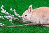 rabbit and pussy willow poster