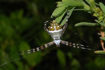 araignée10