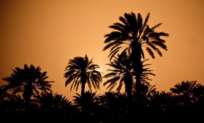 sonnenuntergang/palmen