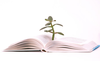 Tree growing from open book.