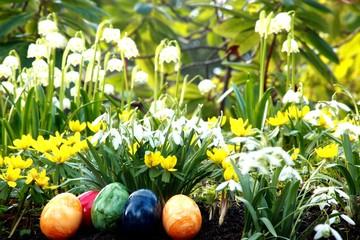 Ostereier, Märzbecher, Winterlinge, Schneeglöckchen
