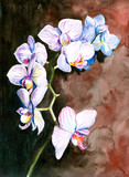 Orchidea malowana akwarelą