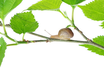 leaves and snail