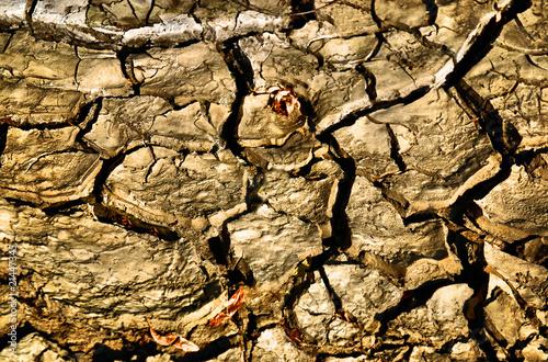 Deurstickers Droogte earth background