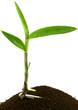 plant orchidée, fond blanc