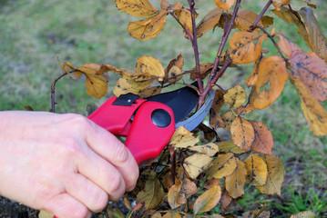 Strauch verschneiden - shrub cutting 04