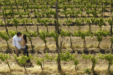 amarsi tra le vigne