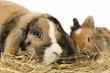 zwei Kaninchen im Heu