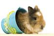 Baby Kaninchen im Eimer